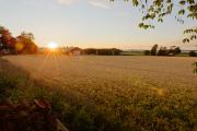 Sunset behind pig farm near lake Tåkern, Östergötland