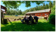 Tollös ecological sheep farm