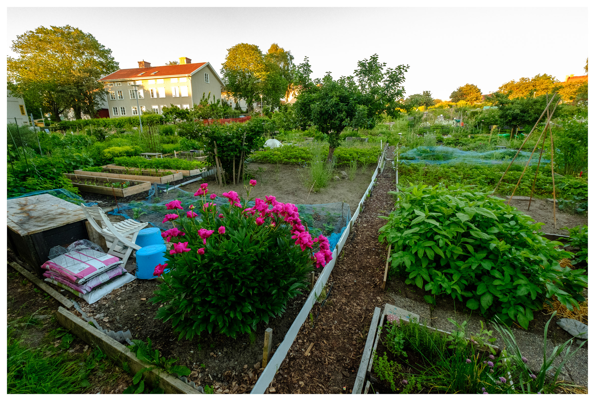 Vegetable and flower gardens by Slottsberget