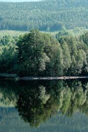 Reflections in Ångermansälven.