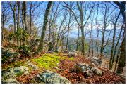 Virginia bushland