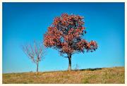 Dry leaves, Virginia