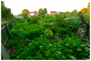 Vegetable gardens by Slottsberget